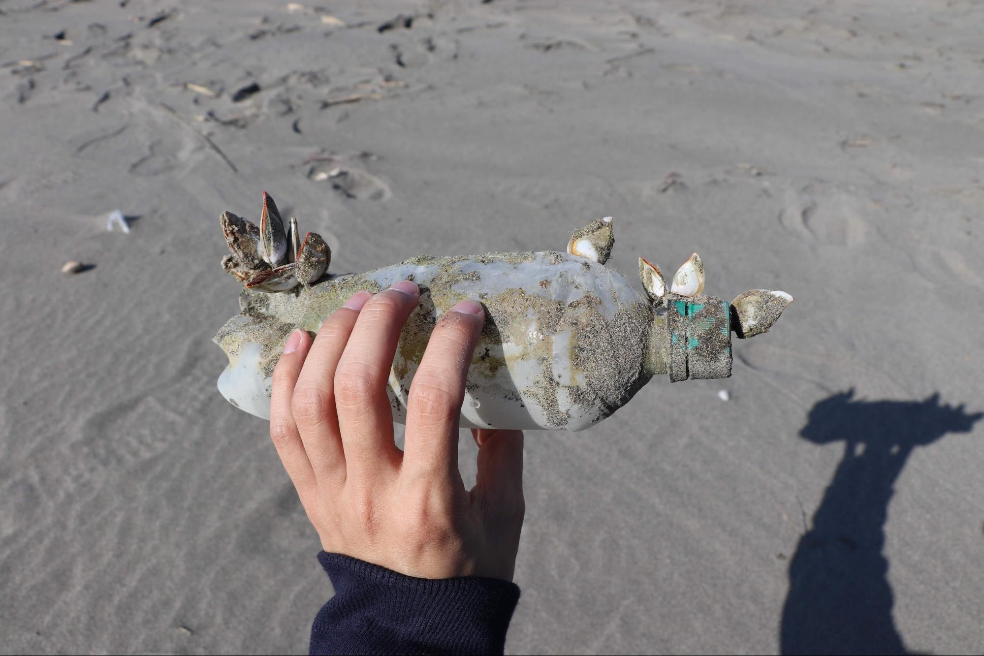 寶特瓶與貝類共存,若分解成為海洋塑膠微粒,屬於次級微塑膠