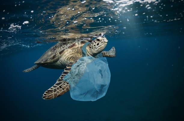 海洋垃圾清理計畫:海洋垃圾示意圖